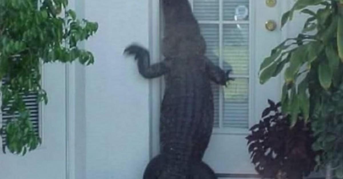 14 Photos Of Things ONLY Happening In Florida