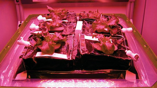 NASA's Plan to Send Lettuce Into Space Dubbed 'Veggie' (ABC News)