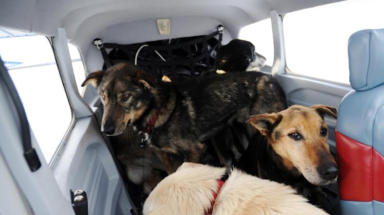 Dropped dogs are loaded into an Iditarod Air Force plane to be flown to McGrath during the Iditarod Trail Sled Dog Race, Wednesday, March 6, 2013, at Nikolai Airport in Nikolai, Alaska. (AP Photo/The Anchorage Daily News, Bill Roth)  LOCAL TV OUT (KTUU-TV, KTVA-TV) LOCAL PRINT OUT (THE ANCHORAGE PRESS, THE ALASKA DISPATCH)
