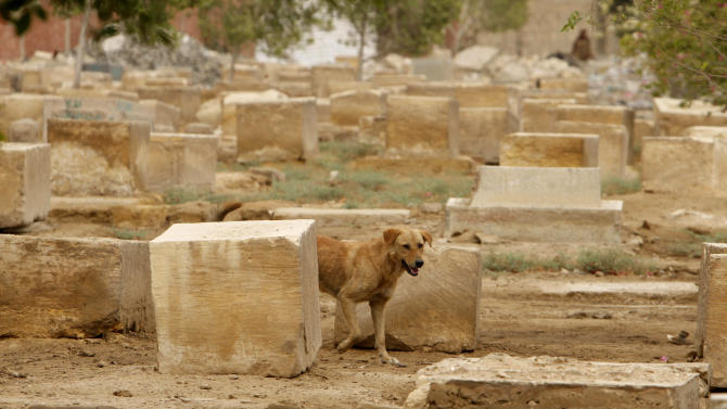 A dog passes by damaged headstones at the Jewish cemetery, in Cairo, Egypt, Thursday, April 18, 2013. The leader of Egypt's dwindling and aging Jewish community, known for her tireless work preserving synagogues and a once-sprawling Jewish cemetery, died Saturday at the age of 82. Carmen Weinstein was buried Thursday in the Bassatine cemetery she herself worked to save since 1978. It is the only Jewish cemetery left in Cairo and is the largest in Egypt. The transformation of Bassatine mirrors the dramatic changes Egypt has undergone as its population skyrocketed and poverty grew. Parts of Bassatine were turned into a garbage dump, while another area was seized by antiquities' officials. Weinstein was able to preserve a small area as a Jewish cemetery.(AP Photo/ Amr Nabil)