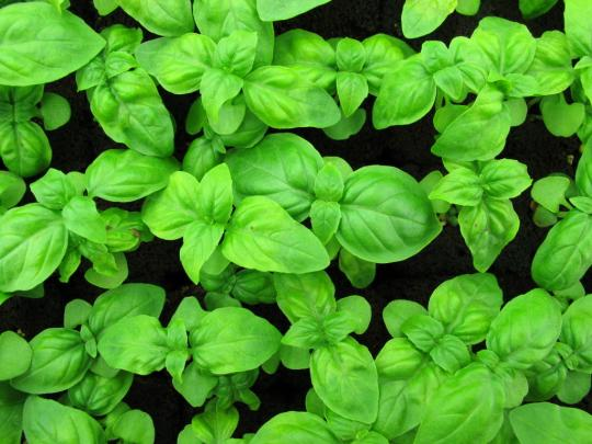 Ten Veggies and Herbs That (Practically) Grow Themselves