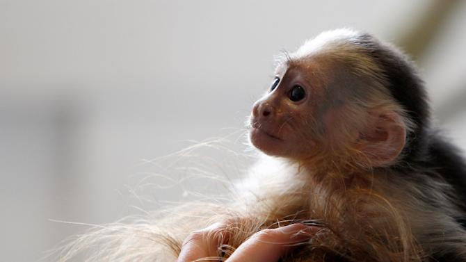 Is Justin Bieber Leaving His Pet Monkey in Germany Forever?