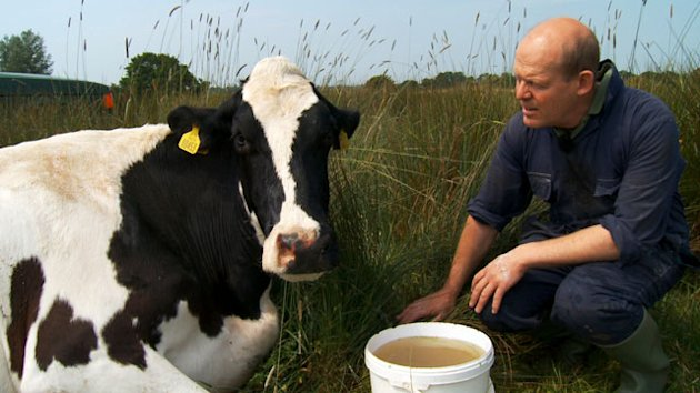 &#39;Moo Man&#39; Celebrates Cow Whisperer (ABC News)