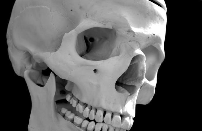 Homeless Florida Man Brings Human Skull to Grocery Store