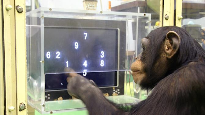 "In this Dec. 13, 2006 photo provided by the Primate Research Institute of Kyoto University, a 5 1/2-year-old chimpanzee named Ayumu performs a memory test with randomly-placed consecutive Arabic numerals, which are later masked, accurately duplicating the lineup on a touch screen computer in Kyoto, Japan. The young chimpanzees in the study titled ""Working memory of numerals in chimpanzees"" by Sana Inoue and Tetsuro Matsuzawa could memorize the nine numerals much faster and more accurately than human adults. The evidence that animals are more intelligent and more social than we thought seems to grow each year, especially when it comes to primates. It's an increasingly hot scientific field with the number of ape and monkey cognition studies doubling in recent years, often with better technology and neuroscience paving the way to unusual discoveries. (AP Photo/Primate Research Institute of Kyoto University) PART OF A SEVEN-PICTURE PACKAGE WITH ""ANIMAL SCIENCES"""