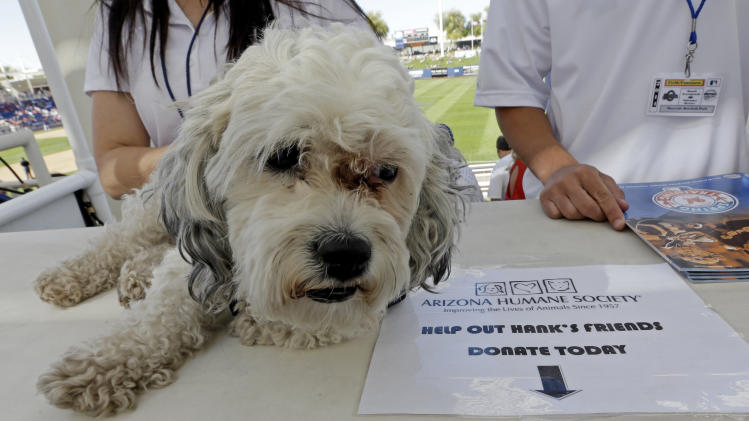 The Milwaukee Brewers unofficial mascot, Hank, waits to be photographed with fans during an exhibition spring baseball game against the Cincinnati Reds, Saturday, March 15, 2014, in Phoenix. (AP Photo/Morry Gash)