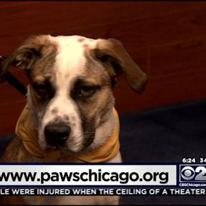PAWS Pet Of The Week: Bear