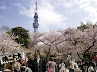 People stroll under fully bloomed cherry blossoms in a park in Tokyo. Japan&#39;s current account surplus fell 8.6% in March from a year earlier as higher energy costs pushed up import bills, official data showed Thursday
