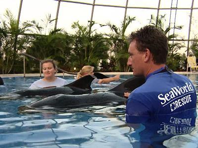 Beached whales doing better at Fla. center