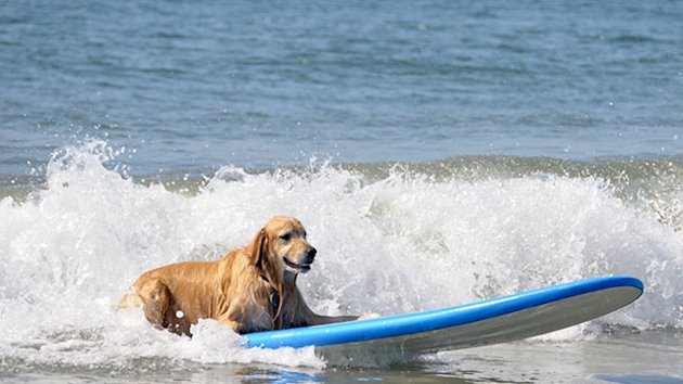 $73,000 Dog Vacation Is World's 'Most Spectacular' (ABC News)