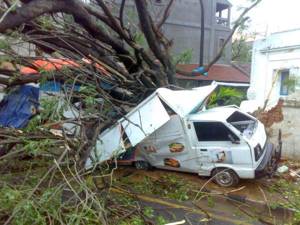 Vehicles damaged by fallen trees