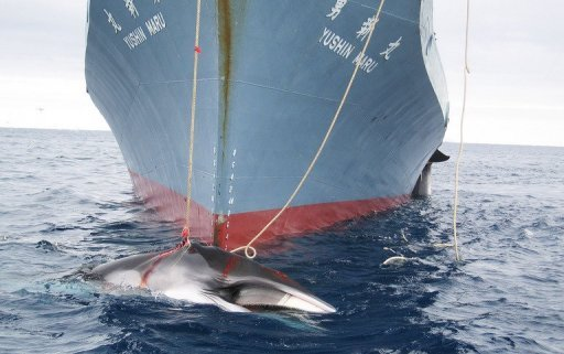 &lt;p&gt;File photo shows a Japanese whaling ship killing two whales in Antarctic waters. New Zealand said Friday it would join an Australian attempt to stop Japanese whaling through the courts after failing to persuade Tokyo to halt its annual cull through diplomatic channels.&lt;/p&gt;