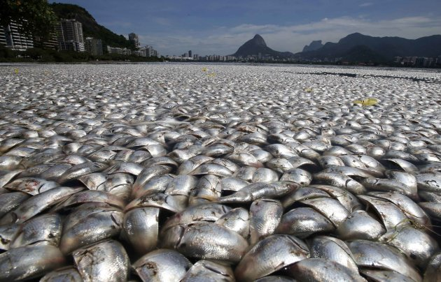 Dead fish are seen at the Rodrigo de Freitas lagoon in Rio de Janeiro