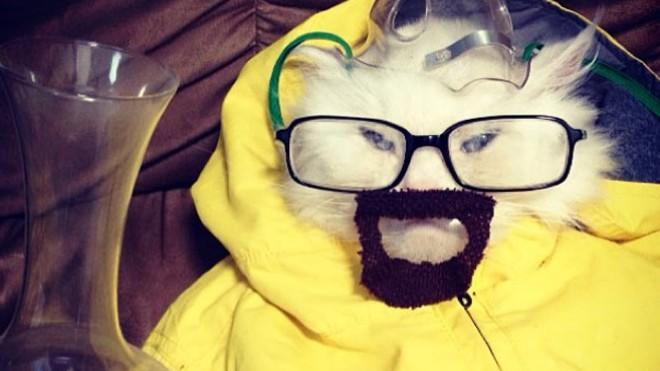 George the Cat does his best Walter White impression