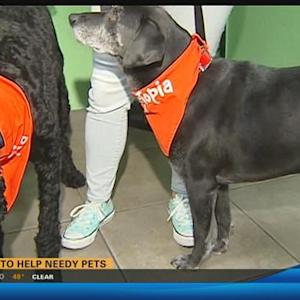Pet drive to help needy animals 6:30 a.m.