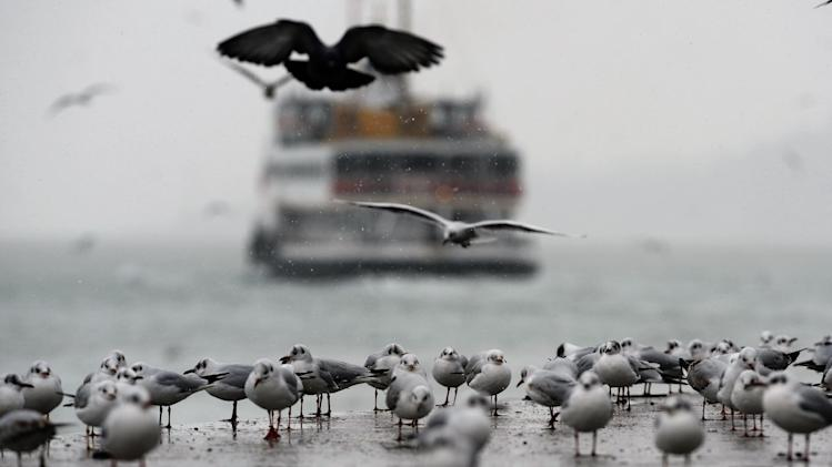 Seagulls rest in snow on the Bosporus in Istanbul, Turkey, Friday, Feb. 10, 2012. Weather authorities forecast that the cold snap will continue throughout the country until the weekend as heavy snow and cold weather paralyzed life and closed several roads in eastern Turkey.(AP Photo)