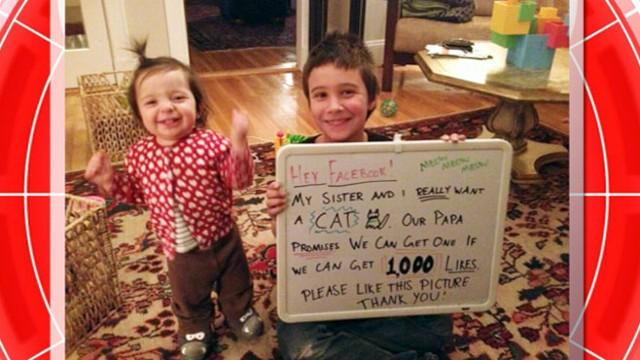 Kids Facebook Campaign for New Cat a Success