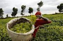 Burundi tea earnings rise 27 pct inside November about significant prices