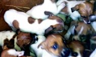 Men Charged After 36 Puppies Found In Cars