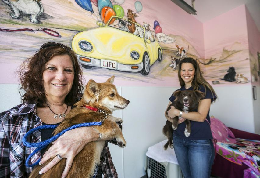 From tiny cages to lots of love, Thai dogs find homes in US