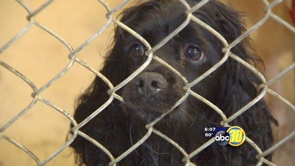 City and County may work together on animal control