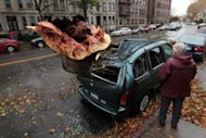A man looks at a tree which fell on a car during Sandy in the Brooklyn borough of New York. Organizers of New York's annual Halloween parade called off this year's event, planned for Wednesday, because of superstorm Sandy