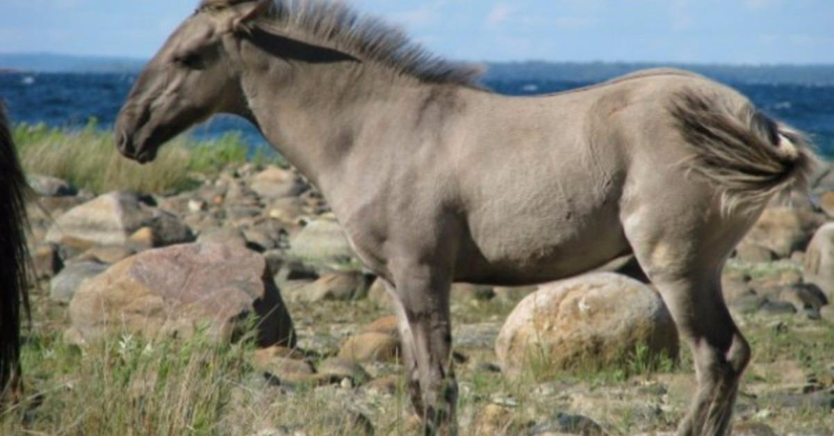 10 Of The World's Most Beautiful Horses