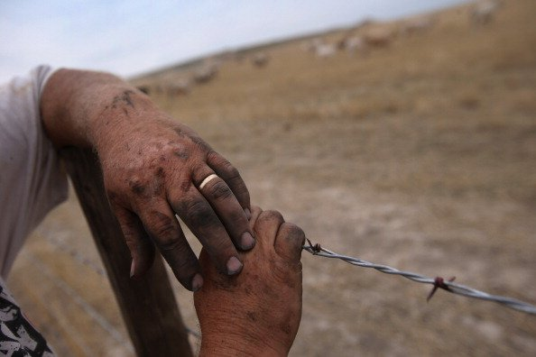 Darren Becker, his hands black from a day of farm work, looks over his cattle field on August 24, 2012 in Logan, Kansas. Like many Kansas farmers who's profits have been wiped out by the record drough