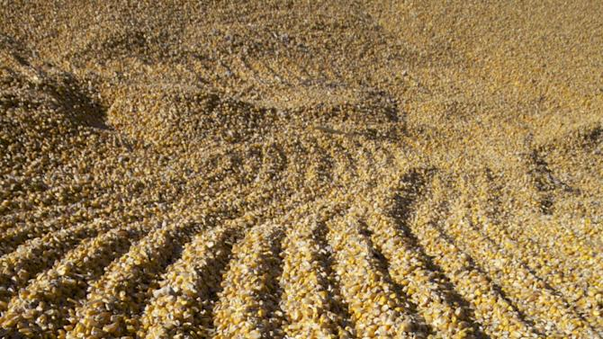 FILE - Corn is seen at a grain elevator in this Oct. 10, 2012 file photo, in Fremont, Neb. Farmers will be paid a record $16 billion in crop insurance claims for 2012 because of the widespread drought, a staggering amount that has critics calling for changes to what they say is an inefficient taxpayer subsidy the government cannot afford. (AP Photo/Nati Harnik, File)