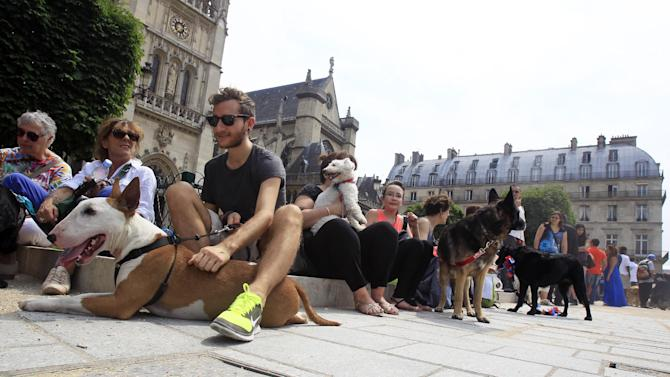 Dog owners gather behind the Louvre Museum in Paris prior to a march toward the Tuileries Gardens, in Paris, Saturday June 8, 2013. At least 100 pooches with owners in tow, holding leashes marched near the Louvre at a demonstration to demand more park space and access to public transport for the four-legged friends. (AP Photo/Remy de la Mauviniere)