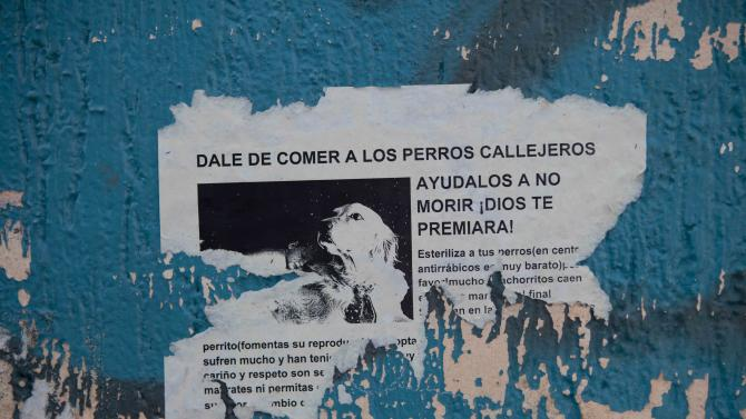 """A poster with an image of a dog reads in Spanish; """"Feed the stray dogs, help them so they do not die. God will reward you!,"""" on a wall in the hilltop borough of Iztapalapa in southeast Mexico City, Tuesday, Jan. 8, 2013. The fatal mauling of four people by feral dogs in a Mexico City park set off debate Tuesday about the city's love/hate relationship with its dog population, and the guilt or innocence of 25 dogs trapped near the scene of the nightmarish killings.  Antemio Maya, president of the Street Dog Protection association, estimates for the overall number of dogs in the city of nearly 9 million people range from 1.2 million to 3 million animals. (AP Photo/Eduardo Verdugo)"""