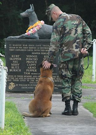 A new bill would sreamline the adoption process for retired military dogs.