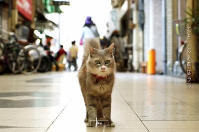 Japan just created Google Street View for cats