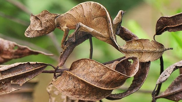 En images : les prouesses du camouflage animal