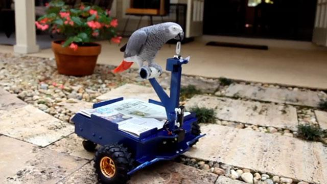 Man Builds Mini Car for Pet Parrot