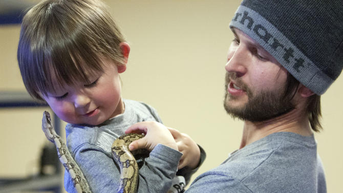 Thomas Cobb lets his young son Daiden hold one of his snakes as he shows off several of his exotic reptile that he keeps in a special basement room of his home, Friday, April 26, 2013 in Cottonwood Heights, Utah. Cobb has been ordered by police to get rid of all but one of his 29 exotic boa constrictor snakes because he doesn't have an exotic pet permit.  (AP Photo/The Deseret News, Scott G. Winterton)  SALT LAKE TRIBUNE OUT;  MAGS OUT