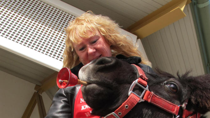 In this Nov. 17, 2012 photo Tinker, a miniature horse, rings a red bell for the Salvation Army with his owner Carol Takacs in West Bend, Wis. Takacs says his name was Tinker when she and her husband got him and they couldn't have named him better if they tried. (AP Photo/Carrie Antlfinger)