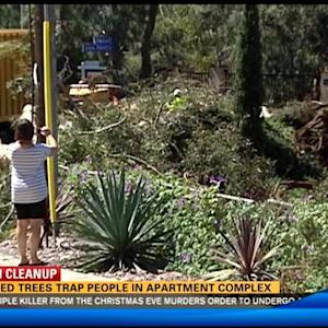 Downed trees trap people in apartment complex