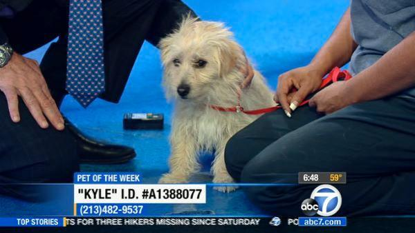 Pet of the week: 2-year-old Terrier-mix named Kyle