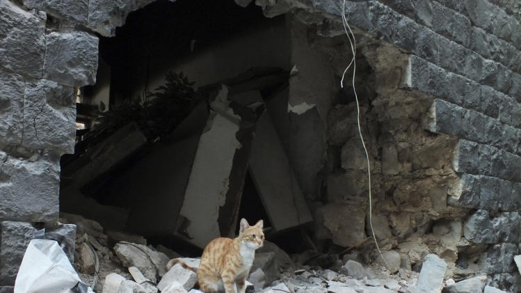 A cat sits on the debris of a damaged house in the neighbourhood of old Homs