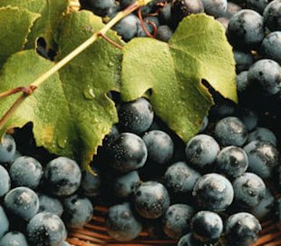 Five health benefits of concord grapes