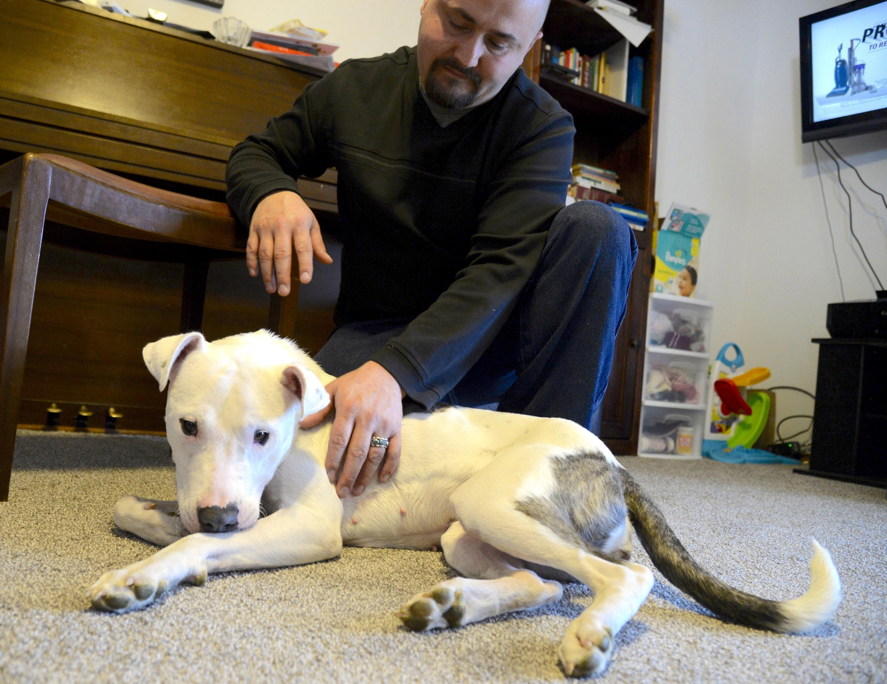 'Miracle dog' survives being hit by car, clubbed, abandoned