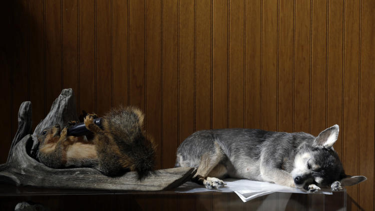 Mo. taxidermist preserves man's best friend