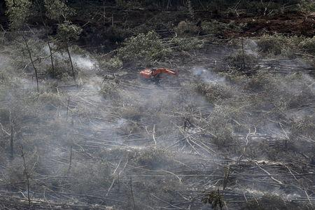 Big palm oil's pledge to preserve forests vexes Indonesia