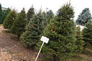Prevent these trees from ending up in a landfill!