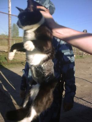 In this handout photo taken on Friday, May 31, 2013 and released by press service of the Russian Federal Penitentiary Service for the Republic of Komi, guards show a cat which they catch on clandestine mission at the Penal Colony No. 1 near the city of Syktyvkar in the Komi province, 1,000 kilometers (some 600 miles) northeast of Moscow, Russia. Guards patrolling a prison colony in Russia's north saw a cat on the fence and it seemed to be carrying something. On a closer look, they found a few cellphones and chargers taped to the cat's belly. (AP Photo/Press service of the Russian Federal Penitentiary Service for the Republic of Komi)