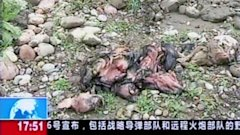 aptn cctv china dead ducks ll 130329 wblog First Dead Pigs, Now Dead Ducks Foul a Chinese River