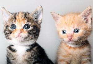 Kittens | Photo Credits: Dan Kitwood/Getty Images