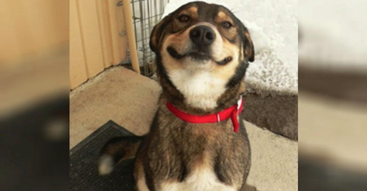 17 Dogs Smiling That Will Put You In A Great Mood