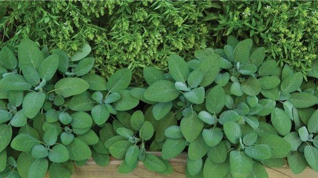 MULTIMEDIA UPDATE: New Herbs Collection Provides Perfect Accent for Gourmet Cooks